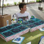 4-H entrepreneur selling blueberries