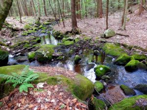 woodland stream; photo by C.D. Eves-Thomas