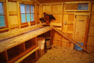 poultry coop interior