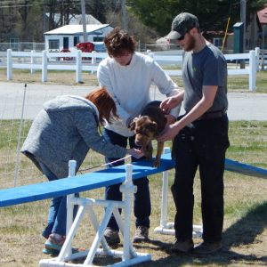 Dog learning to walk across a plank at Dog Camp