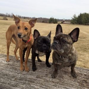 Sarah Stoodley's 3 dogs