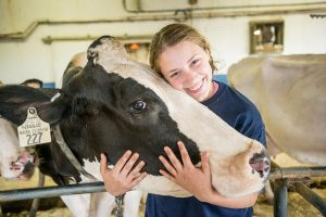 4H member with a cow
