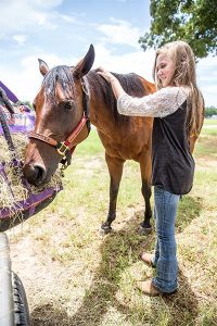 a middle school girl grooming a horse