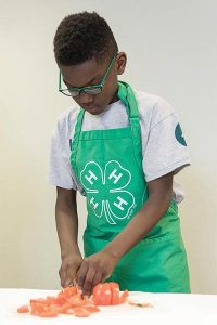 young boy, chopping tomatoes, wearing a 4-H apron