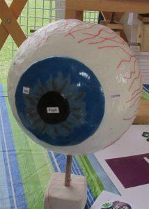 model of an eye