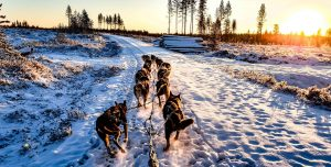 Team of dogs pulling a sled over snow.