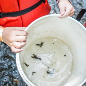 youth hands holding a bucket of water with bugs from out of a brook