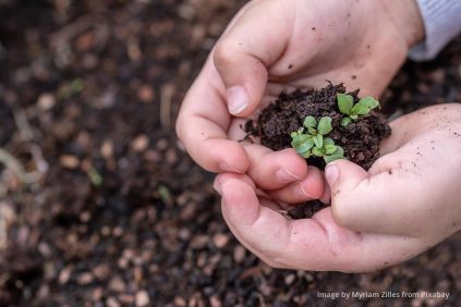 a child's hands holding a seedling
