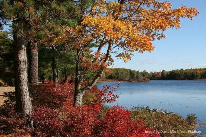 forst and a lake in Maine in autumn, autumn leaves on the trees