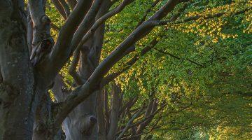 Summer trees along a path.