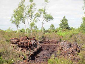 Archaeological excavation of Ireland Peat Bog