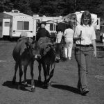 4-Her with cows at fair