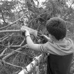 4-H'er trims limbs from a tree
