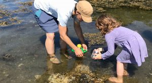 Youth and adult eploring a tidepool