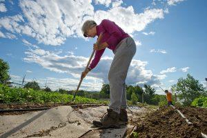 elderly farmer hoeing garden