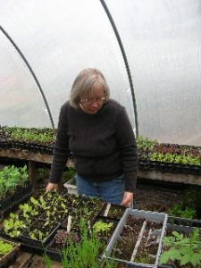 woman with seedlings in greenhouse