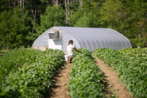 hoophouse and woman farmer working in field