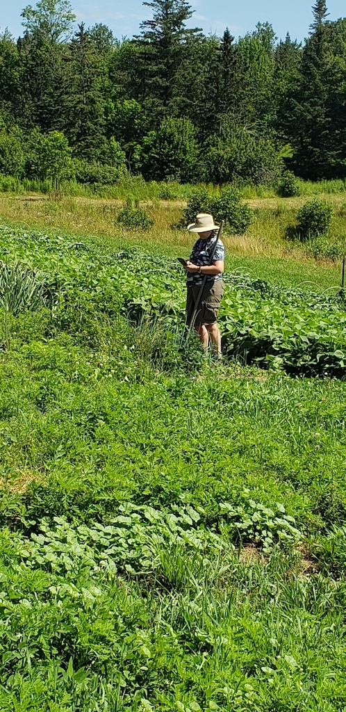 woman farmer in field using a cell phone