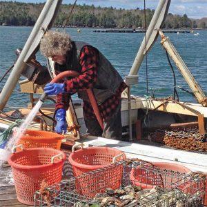 fisherman hauling shellfish on his boat