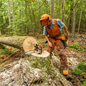 logger with chainsaw and downed tree
