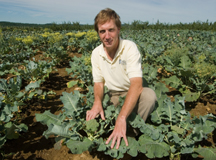 Extension expert conducts broccoli trials at Highmoor Farm; photo by Edwin Remsberg, USDA