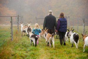 Multi-generational farm family walking with goats