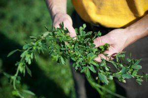 farmer holding plant