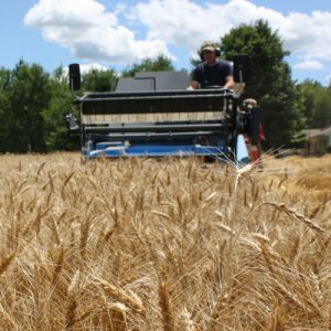 Farmer on wheat harvester in field