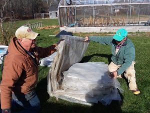 Used greenhouse plastic being folded for recycling