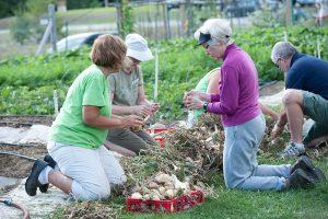 Tending to community garden