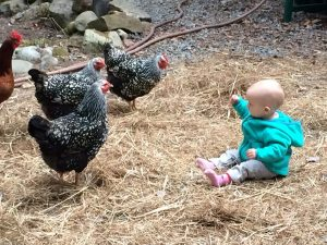 3 chickens and a toddler