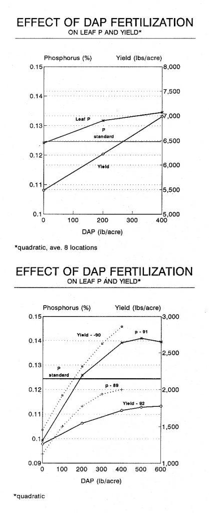 Effect of DAP Fertilization