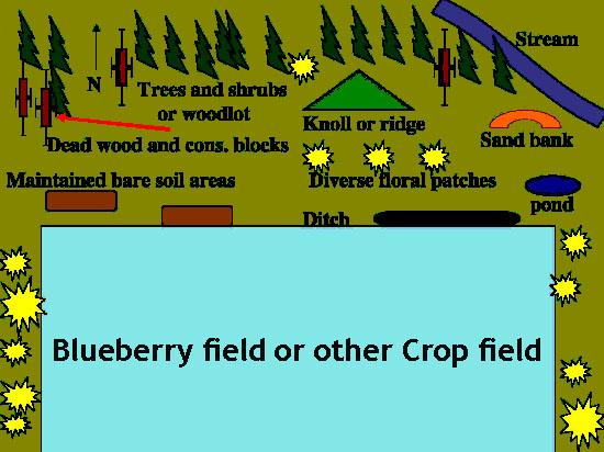 Blueberry field or other crop field