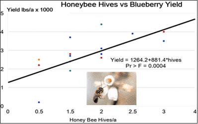 Honey hives versus blueberry yield
