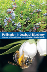 Pollination in Lowbush Blueberry report cover