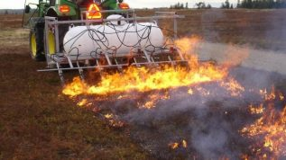 flamer with tractor, burn pruning the blueberries