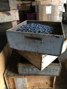 blueberries in wooden harvest box
