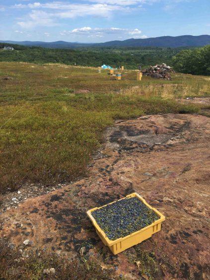 Blueberry box on midcoast mountain