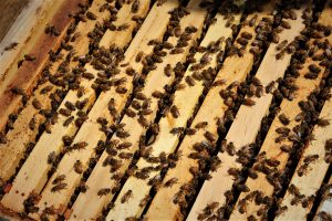 honey bees in managed hive crawling all over wood