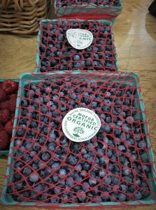 Fresh pack, wild blueberries with red netting to hold them in and MOFGA certified stickers on a counter at a local store