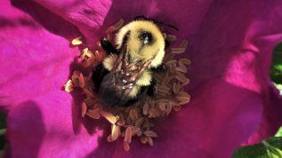 bee image in pink flower
