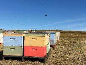 pollinator boxes