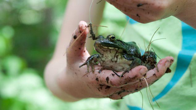 Camper holding frog