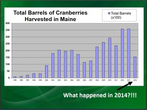 Slide showing number of barrels of cranberries harvested in Maine annually from 1995 to 2014 (big drop between 2013 and 2014 by almost half)
