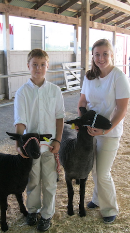 sheep and 4-H youth exhibiting at a fair