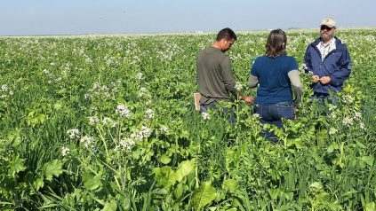 3 people standing in cover crops