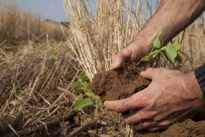 Soil scientist also known as an agronomist, looks at soil to determine its health, Virginia.
