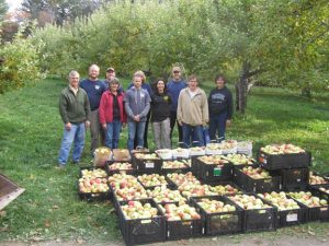 Maine Harvest for Hunger volunteers in an apple orchard with bushels of freshly picked apples