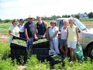 Maine Harvest for Hunger volunteers with bins of freshly picked green beans