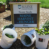 Maine Harvest for Hunger garden plot sign and freshly picked produce